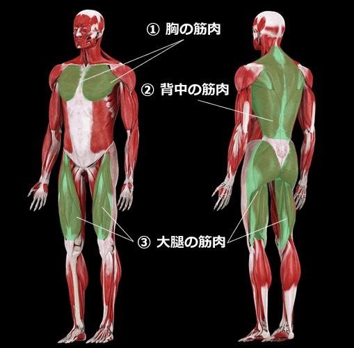 筋肉のビッグ3